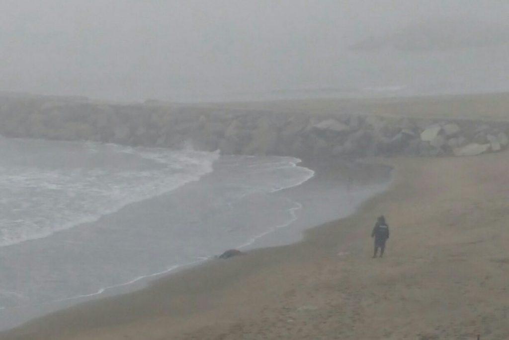 Hallan el cuerpo sin vida de una mujer en Mar del Plata