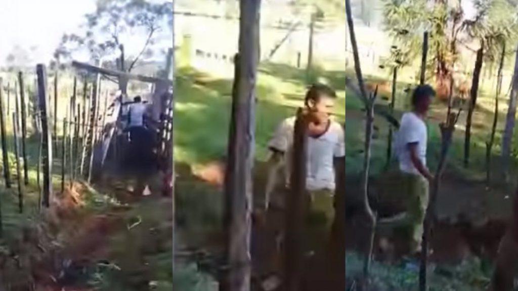 Lo halló teniendo sexo con su vaca — Increíble video