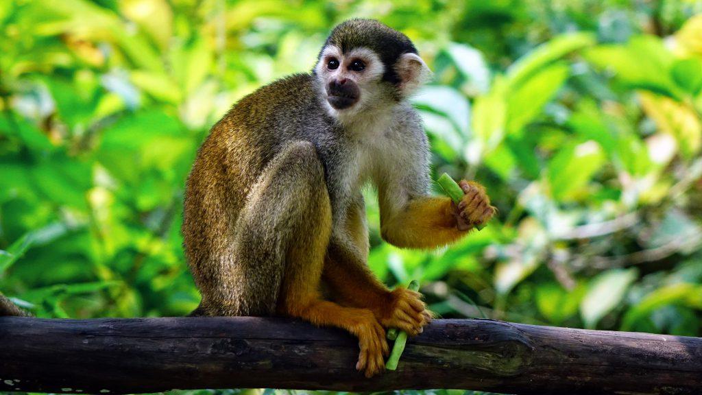 Asesinan a monos en Brasil por temor a fiebre amarilla — Inhumano
