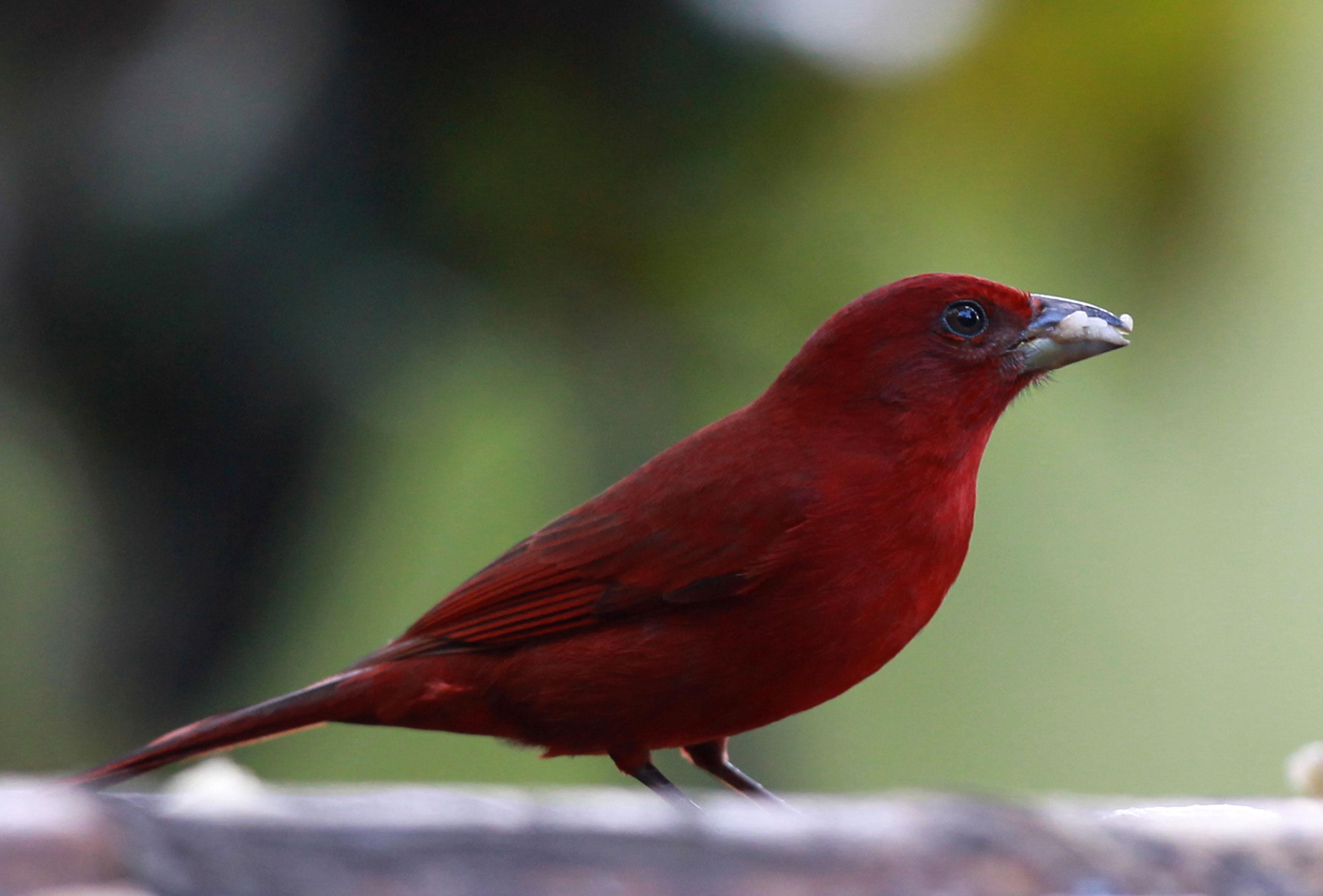 Feria internacional de aves Colombia Birdfair 2018