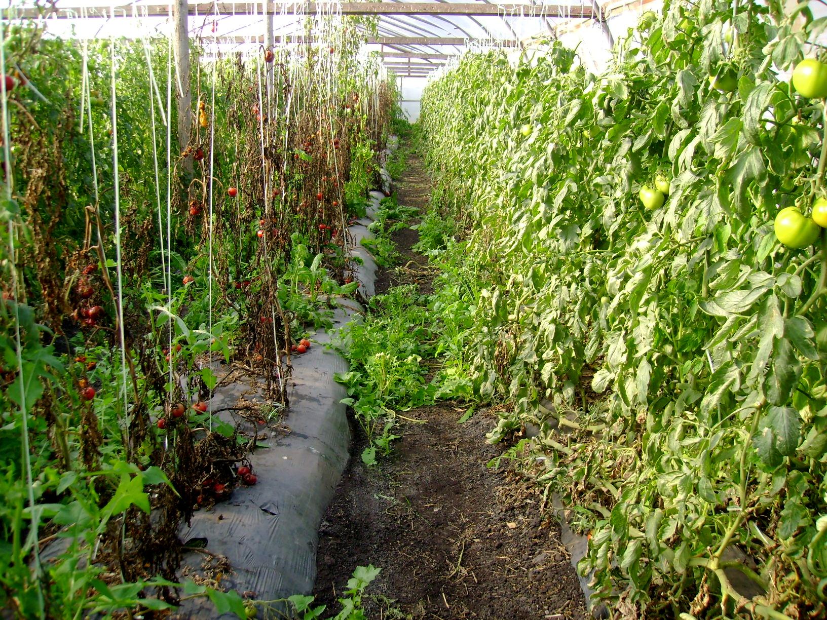 Avances con injertos en horticultura