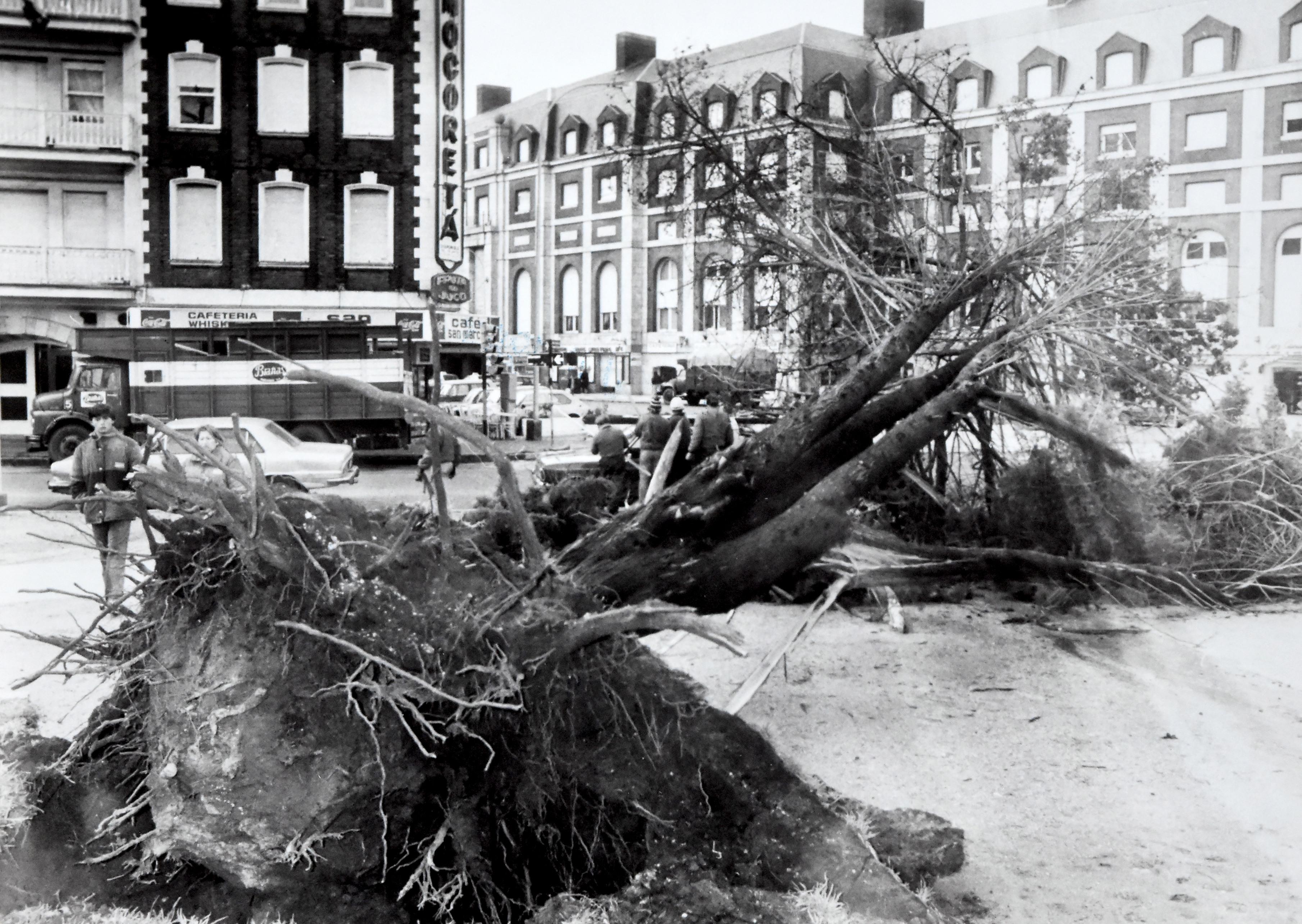Un árbol caído en la plaza Colón.