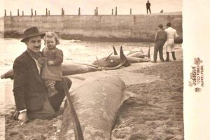 Suicidio masivo orcas 3