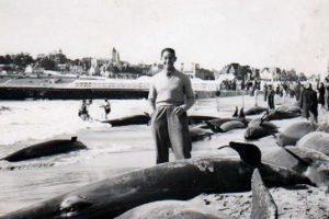 Suicidio masivo orcas 4