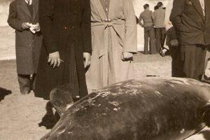 Suicidio masivo orcas 5