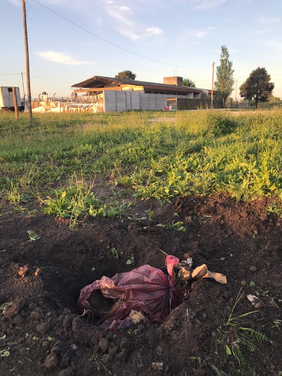 Zoonosis perros asesinados