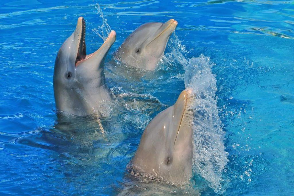 Delfines arrastraron a una niña bajo el agua durante un show