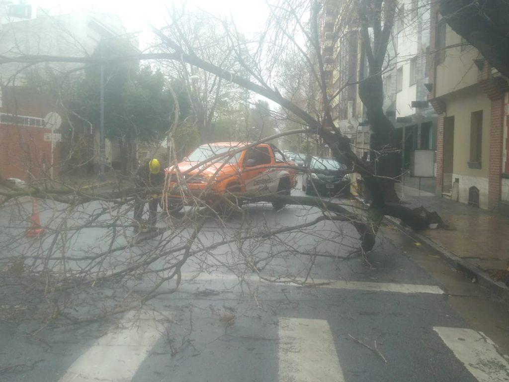Un árbol cayó en la zona de Yrigoyen y Moreno.