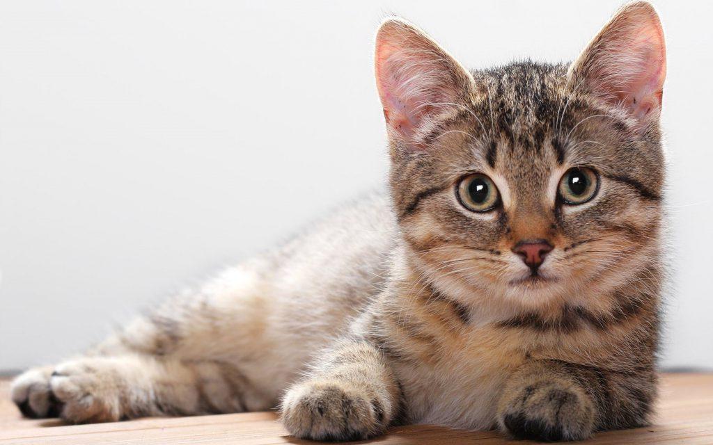 Reino Unido confirma su primer animal con COVID-19