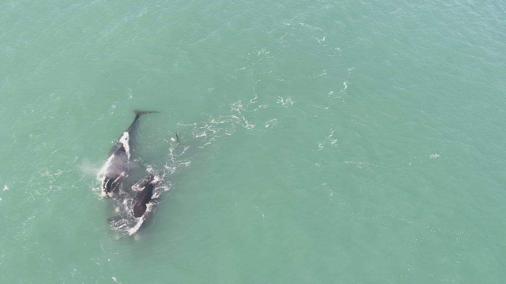 ballenas santa isabel 1