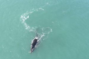ballenas santa isabel 2
