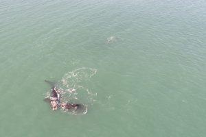 ballenas santa isabel 4
